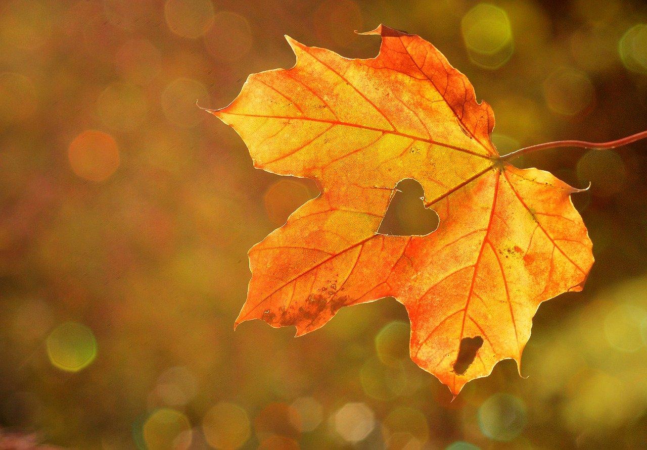 heart, leaf, autumn-1776746.jpg